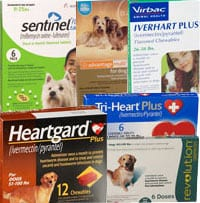 Is Heartworm Prevention Enough Gwinnett Pet Watchers
